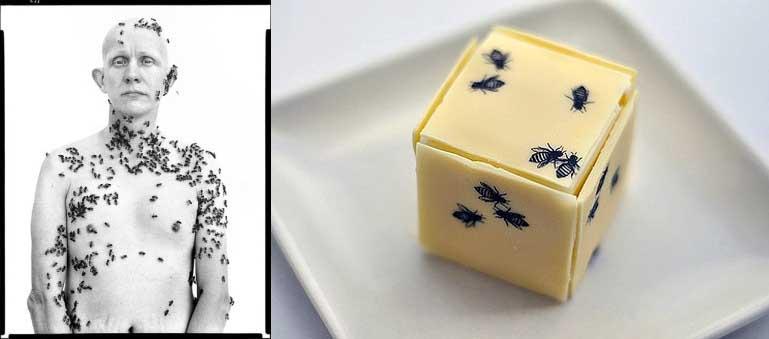 avedon egoistokur beekeeper