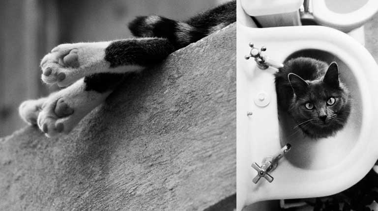 hulki aktunc egoistokur kediler ibrahim yildirim