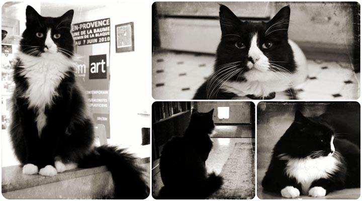 henri le chat noir egoistokur 1